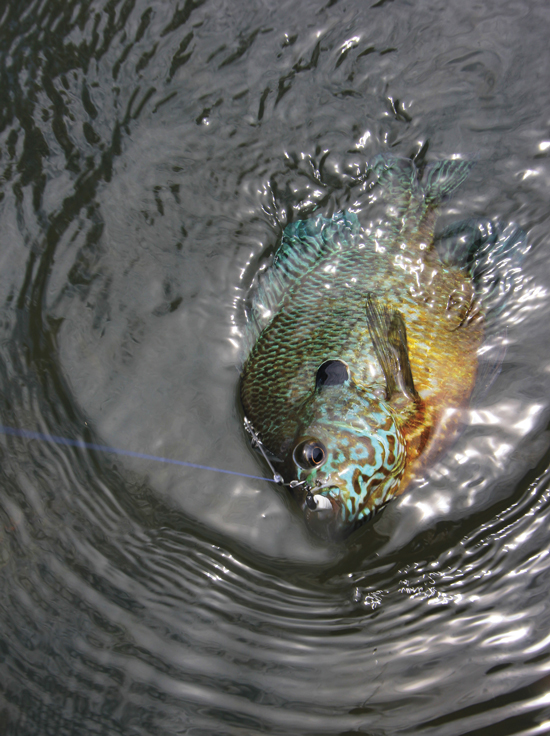 Spinners for Big Panfish