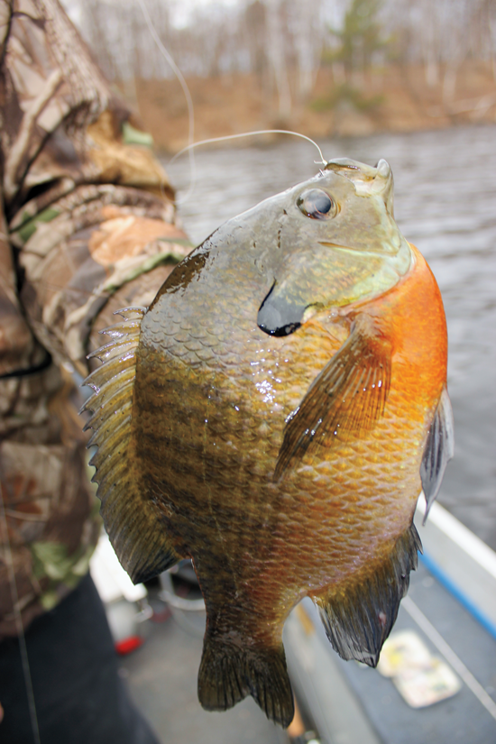 Summer Into Fall River Panfish