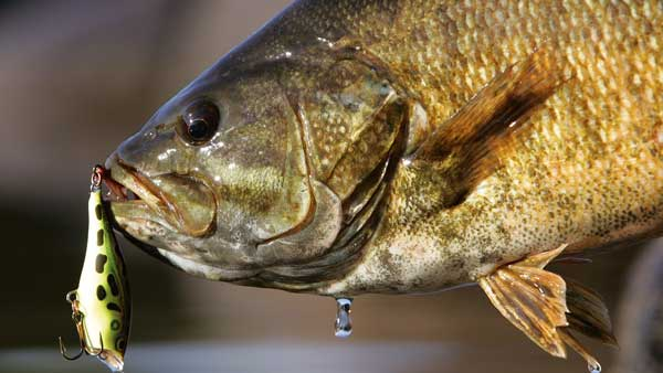 Eastern Montana's Best Lake for Amazing Angling