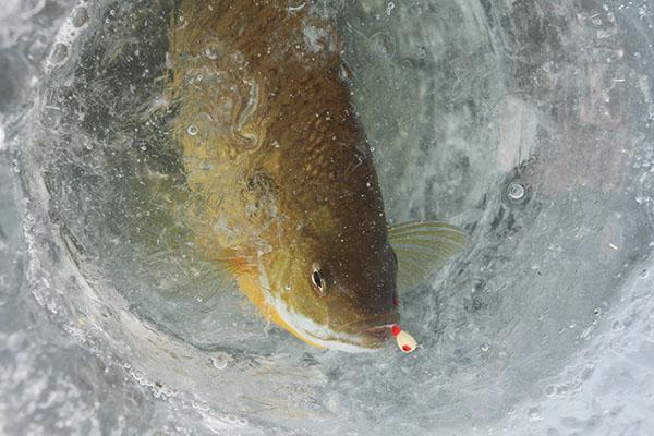Panfish UV Light Baits