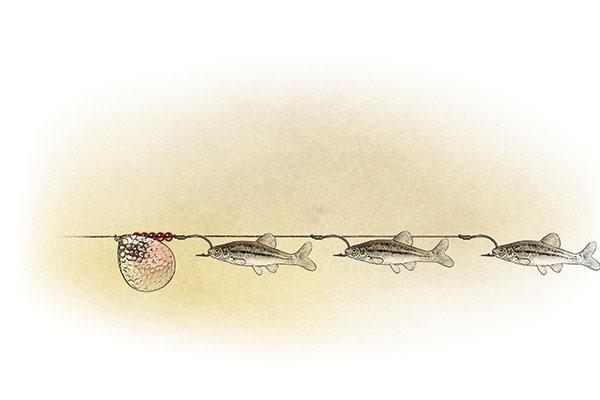 Walleye Spinner Rigging Refinements