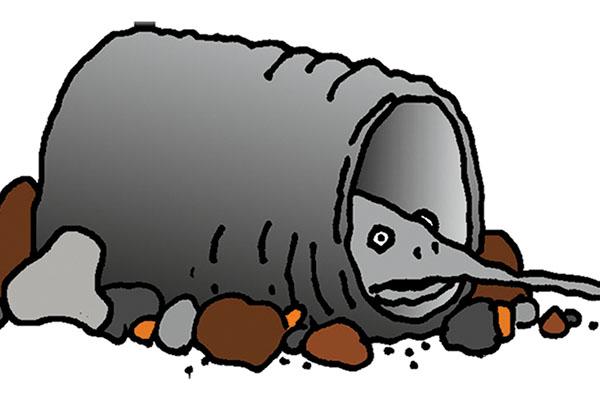 The-Catfish-Myth-Regarding-Poisonous-Spines