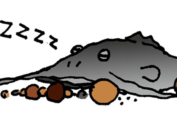 Catfish-Myths-Regarding-Sleep-Habits