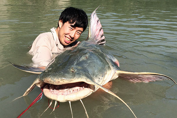 Goonch Giant Catfish