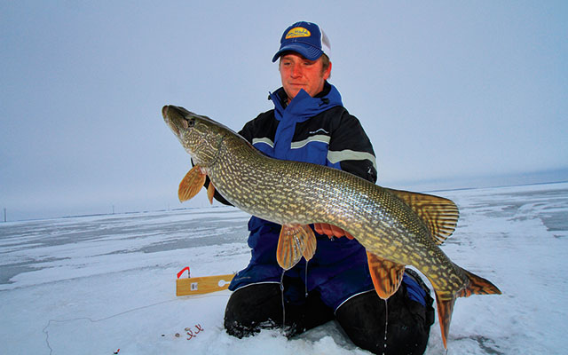 Green Bay Giant Pike Under Ice