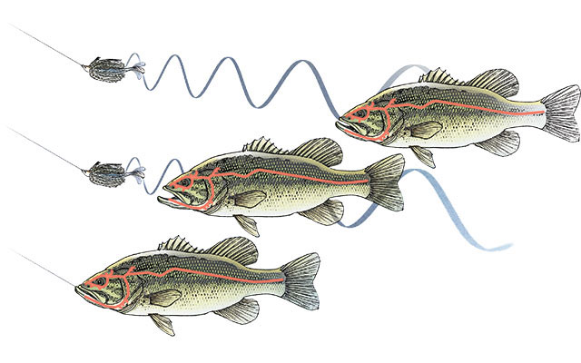 Adding Softbait Trailers to Bass Lures