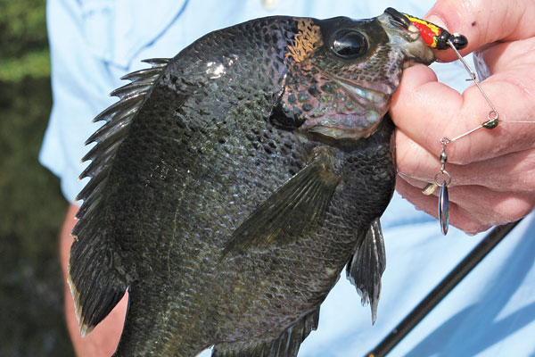 Panfish Hotspots in Florida