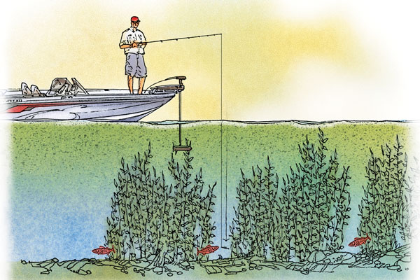 Walleye Fishing During Algae Blooms