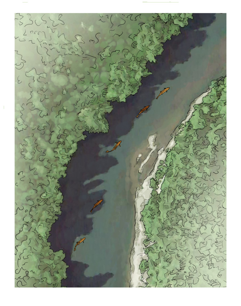 Trout use shadow edges to conceal themselves and feed, just as they would in a transition seam from slow to fast water. Joe Mahelr illustration