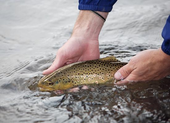 Trout Fishing In Utah