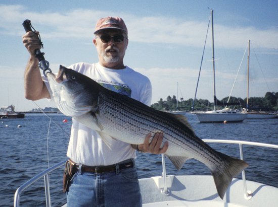 Striped Bass In New Hampshire