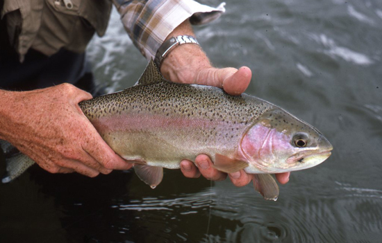 //www.flyfisherman.com/files/2011/07/jumps-img-FFMP-090200-JUMPS-08.jpg