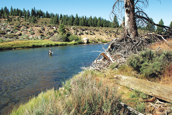 California 39 s truckee river fly fisherman for Trout fishing california