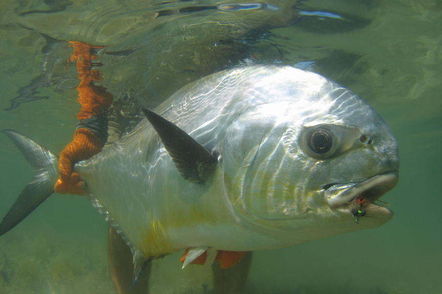 The Bonefish Tarpon Trust has joined with Costa Sunglasses to form a multiyear research and