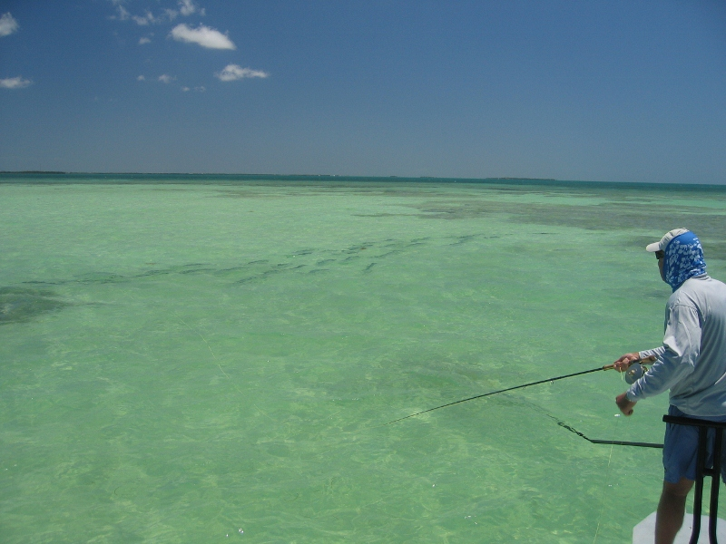 This is what every salt water fly fisherman dreams about!
