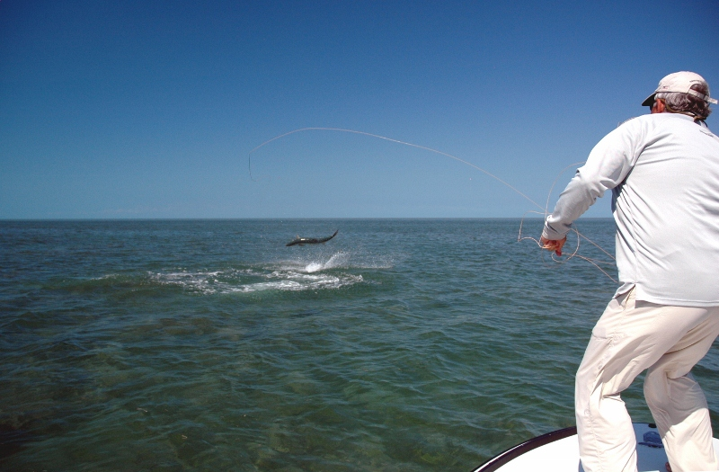 Clearing line quickly after hooking a giant tarpon can sometimes happen before you know it.