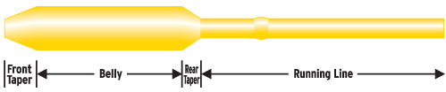 The Belly is where most of the weight is stored on fly lines and is the section between the front taper and the rear taper.