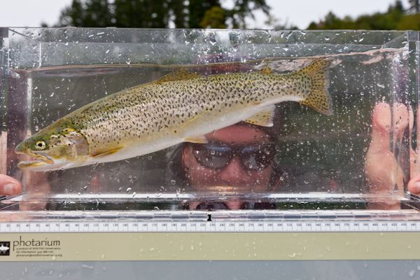 Check out the Photarium. Available through the Wild Fish Conservancy, these Plexiglas boxes enable the angler to observe and take images of their catch.