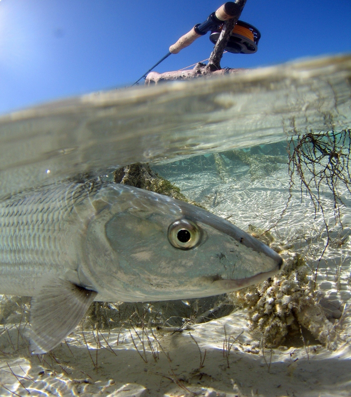 Check out this cool feature on a bonefish eye!