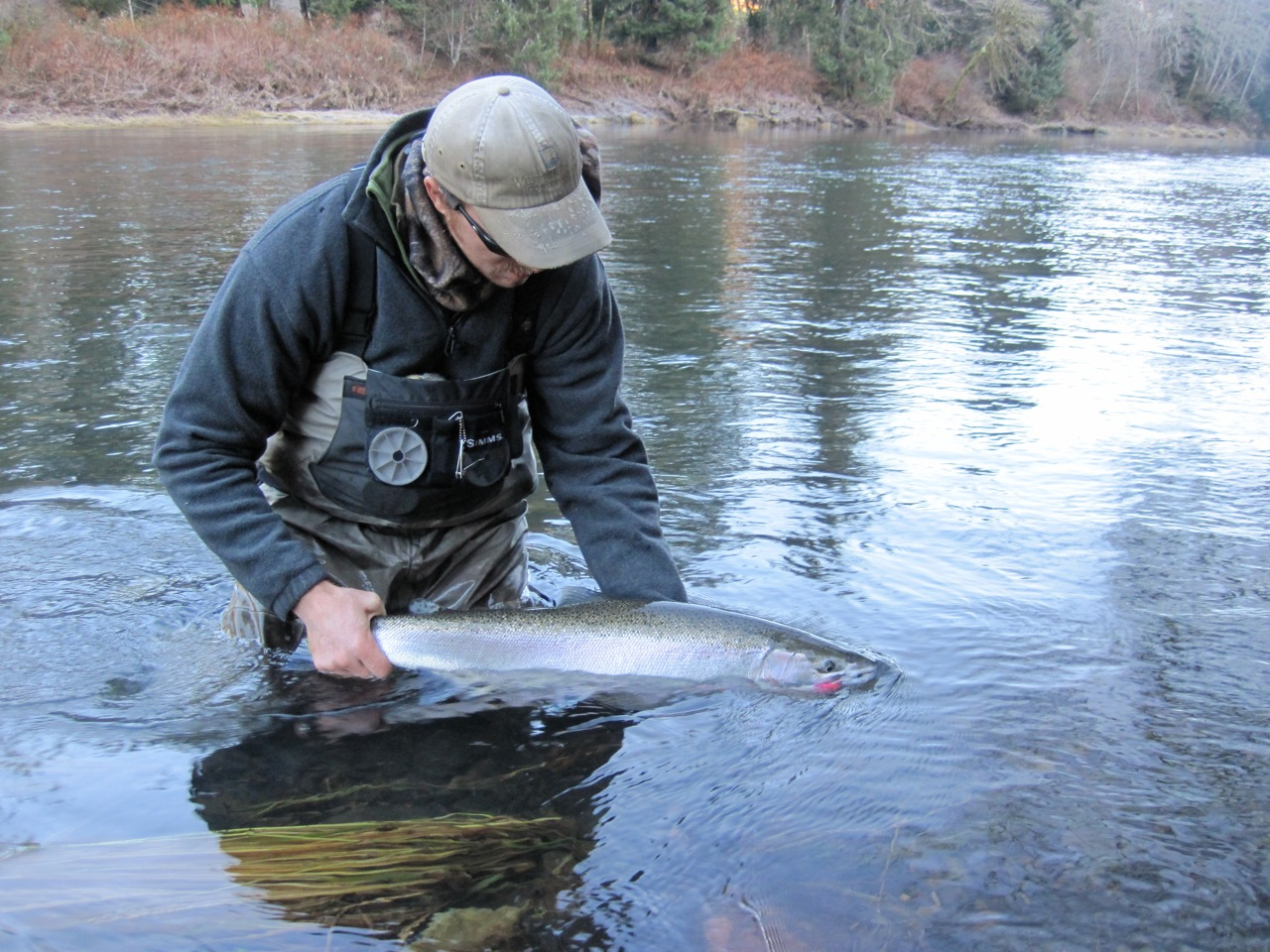 Winter IS Steelhead Season
