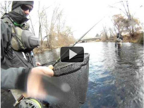 While nymphing a flat on an urban fishery angler Devin Olsen caught one that fought like a wet