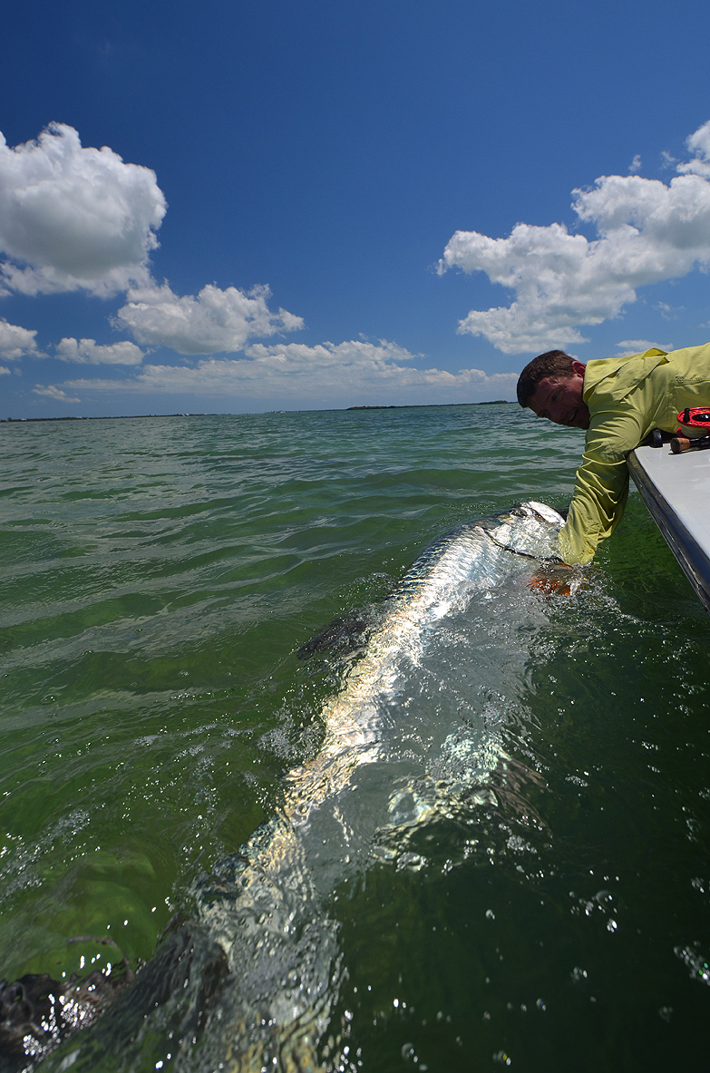 Towing a 110-pound Keys tarpon away from a shark