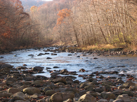 In 1992 the North Branch of the Potomac had no fish, and macroinvertebrates were difficult to