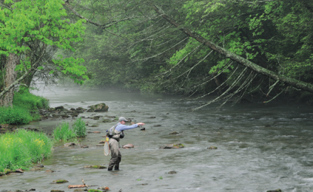 In case you missed a great article by George Daniel in the last issue of Fly Fisherman's print