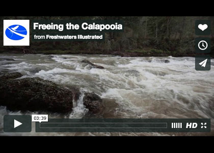 Calapooia Freedom From Dams