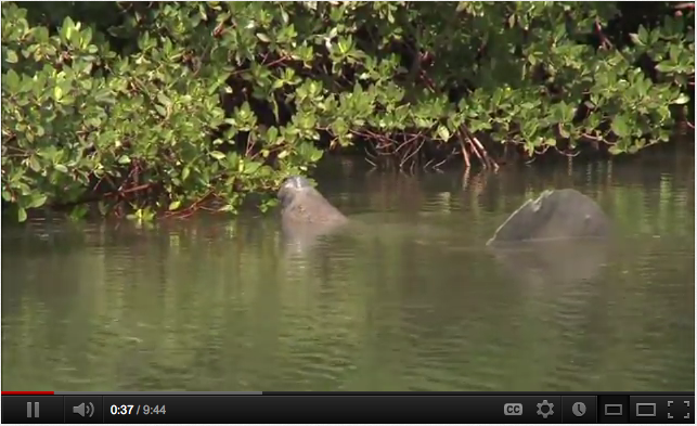 Battle for Biscayne Bay  http://youtu.be/w5AwlaZixKU