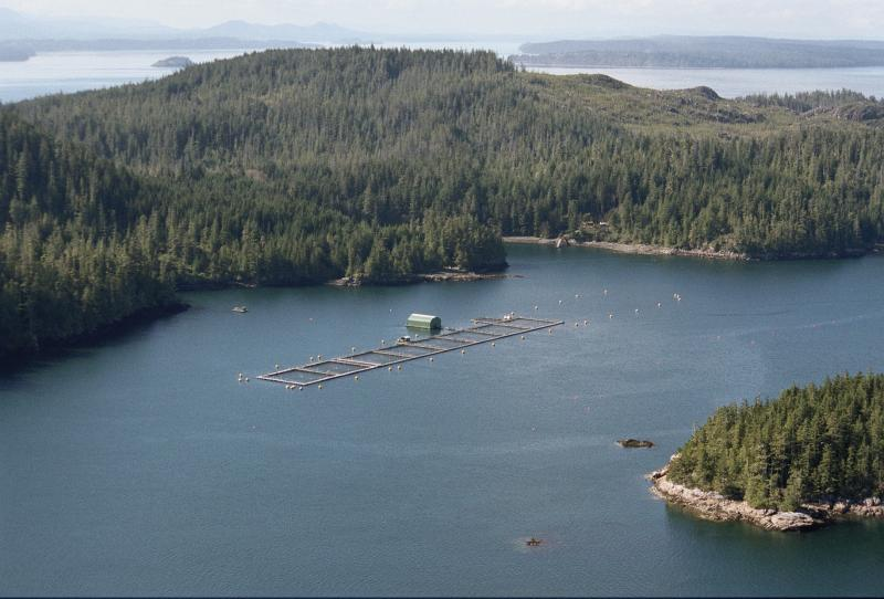 Courtesy of the BC Salmon Farmers Association