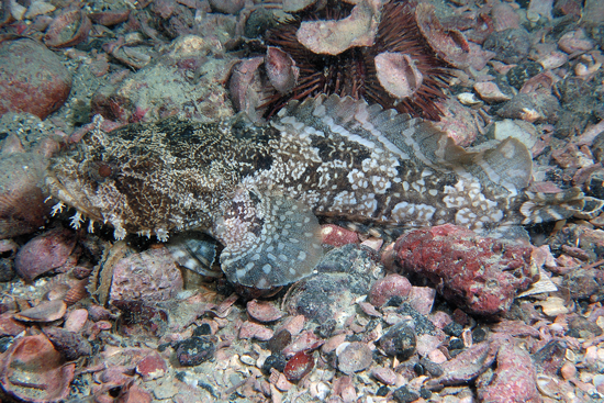 The 3 best toadfish patterns for Florida and the Bahamas.
