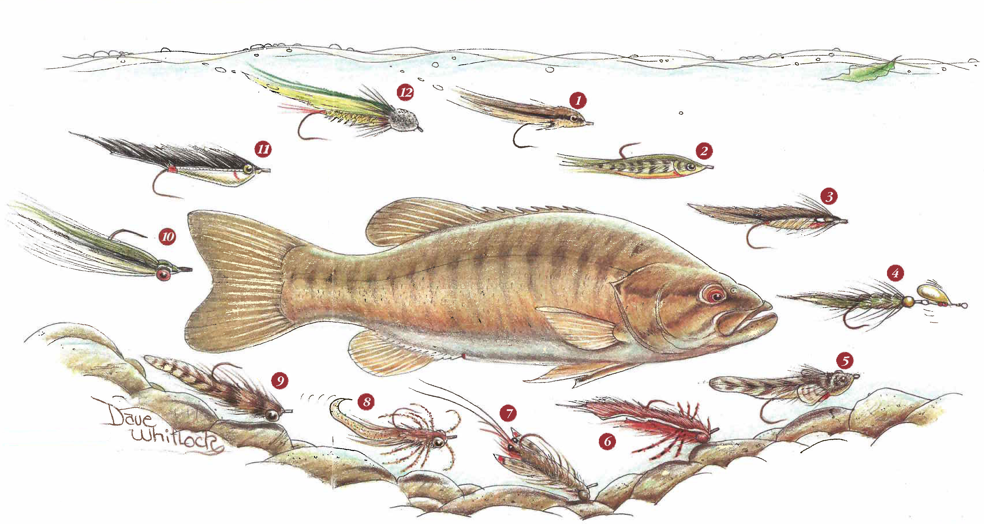 Fly fishing for stream smallmouth page 3 of 3 fly for How to fly fish for bass