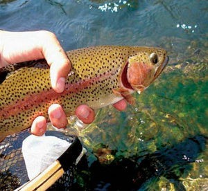 Fly Fishing in California