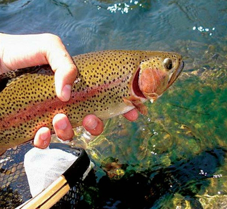 Fly Fishing California