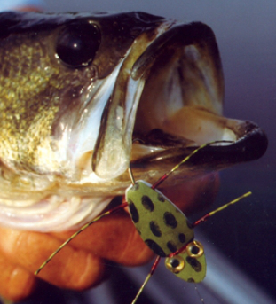 The STP Frog draws largemouth bass from heavy vegetation like seedbeds and brushy shorelines.