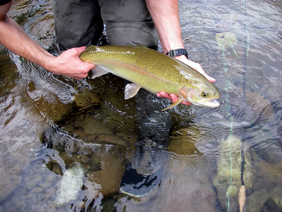 West virginia fly fishing fly fisherman for Fly fishing west virginia