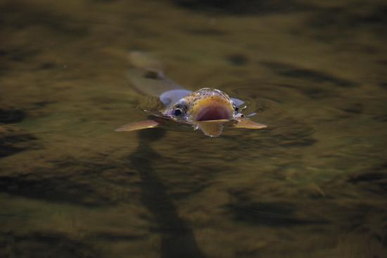 https://www.flyfisherman.com/files/2013/05/Fish-Open-Mouth.jpg