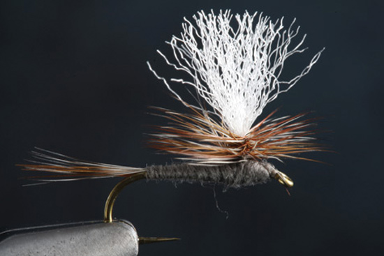 The Para Adams fly step-by-step and how-to video featuring expert tier Charlie Craven.