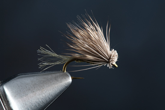 Fly Tying The X Caddis