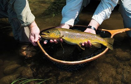 Kennebec-Browns-Feature-Fly-Fisherman