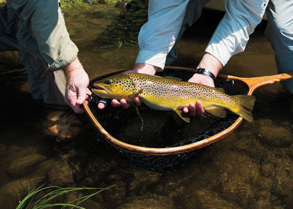 Kennebec River Browns