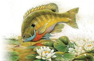 Bayou-Bluegill-Leaps-Orange-Humpy-Fly-Fisherman