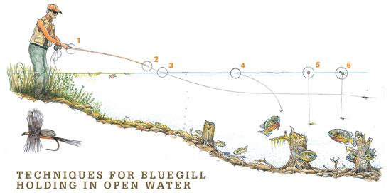 https://files.osgnetworks.tv/16/files/2014/05/Bluegill-Holding-Open-Water-Fly-Fisherman.jpg