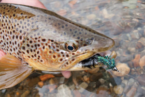 //www.flyfisherman.com/files/2014/05/Presentation-Tips-Fly-Fisherman-300x200.jpg