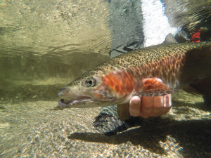 Underwater-Digital-Cameras-GoPro-Conservation-Fly-Fisherman
