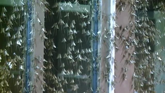 "Massive Mayfly Hatch of ""Biblical Proportions"" Triggers a Three-Car Crash"