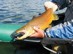 Special regulations in FLIPPR lakes preserve and protect trophy trout. Photo: Larry Tullis