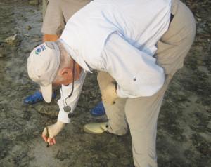 Guanaja Bonefish