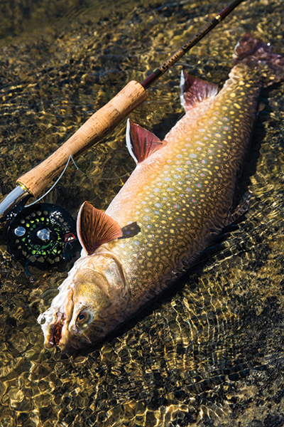 Manitoba Brook Trout